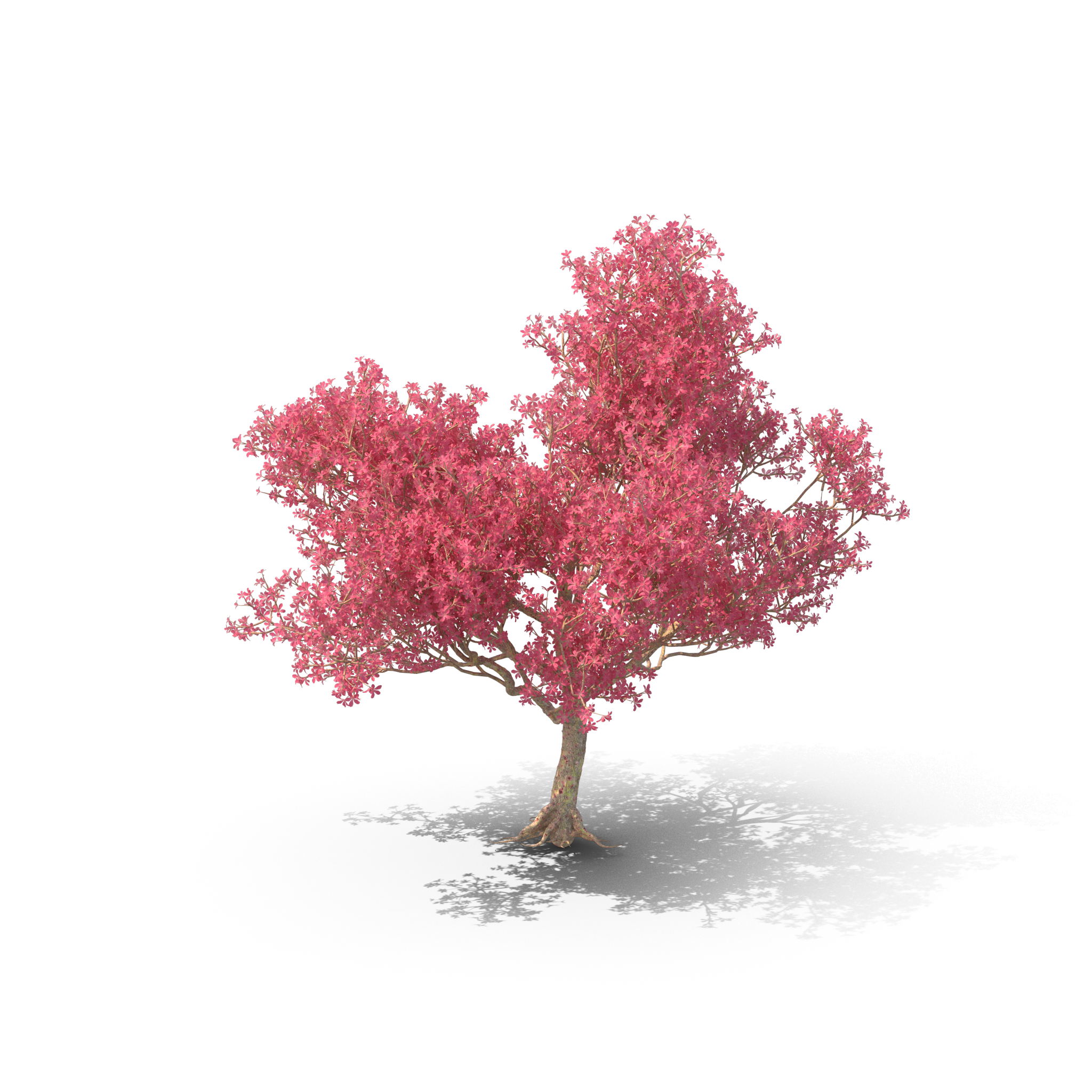 tree-trimming-companies-near-me